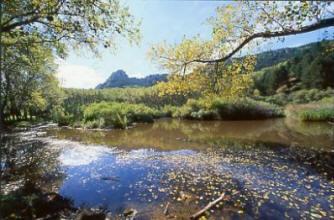 Riserva Naturale Orientata Monti Sambughetti e Campanito